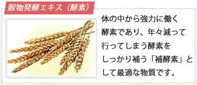 穀物発酵エキス