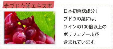 ブドウ葉エキス